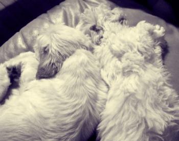 Mini and Taz cuddling