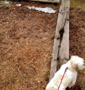 Tiny patch of snow in the yard