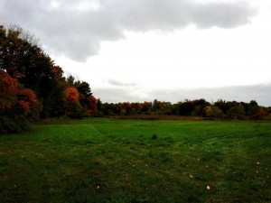 Field with fall foliage in the tree line